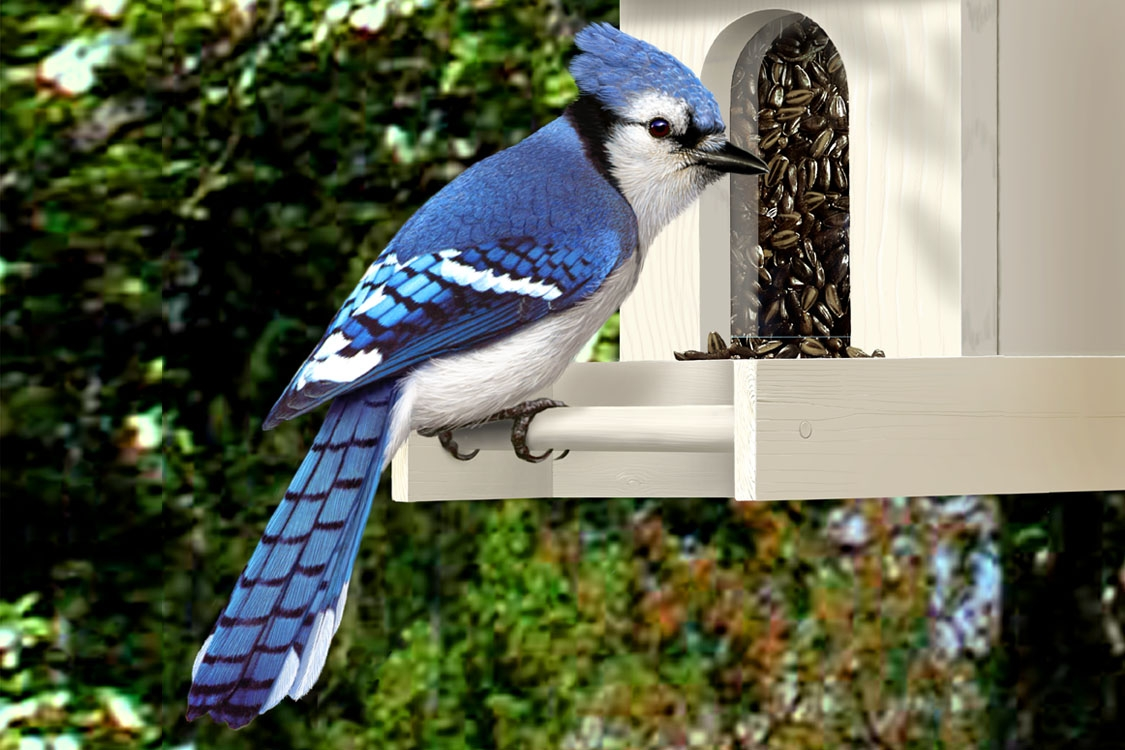 CPC.bluejay