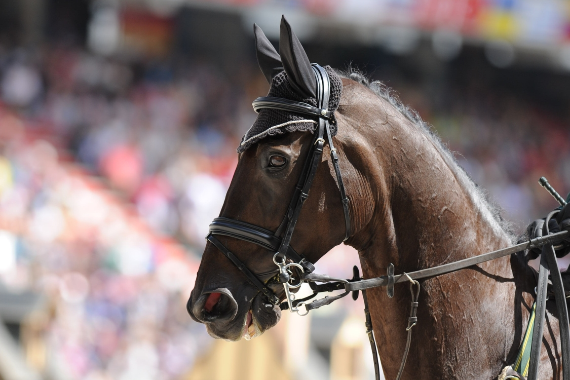 Showjumping : World Equestrian Games