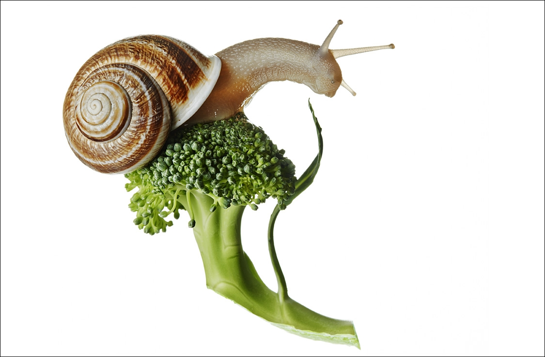 SNAIL_BROCCOLI