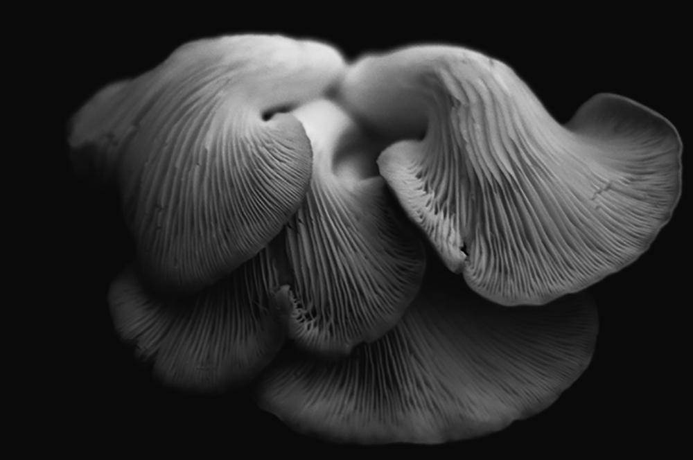 4_theodora-mitrakos_oyster_mushrooms